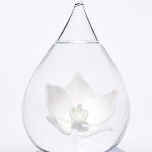 Glazen urn lotus