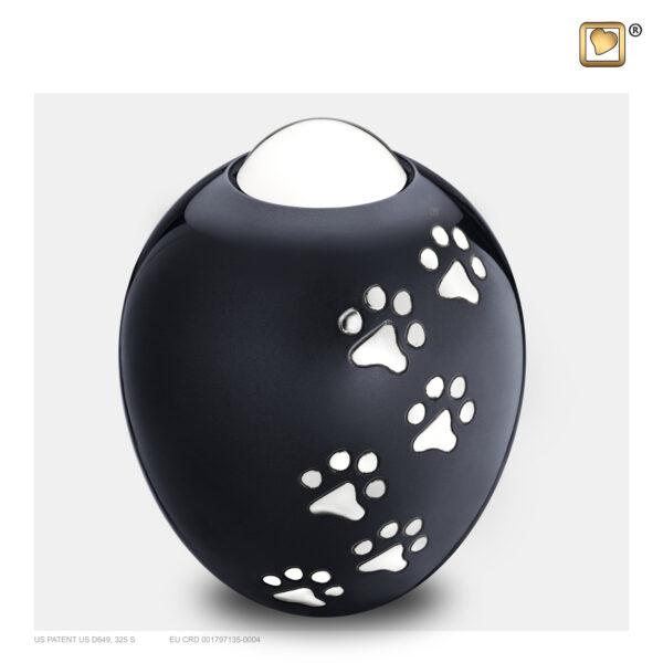 P636L Adore urn groot